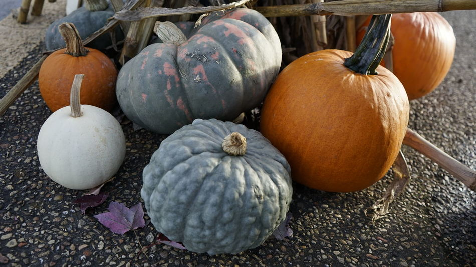 Autumn festival including Halloween characters and decorations. Autumn Collection Autumn Colors Fall Colors Halloween Halloween_Collection Pumpkins Autumn Colours Decorations 🎭 Halloweenparty Outdoors Pumpkin