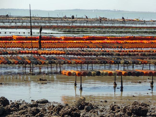 Colour Orange Atlantic Ocean Working Kunststoff Shells Ebbe Watt Mudflat France Ocean View Oceanside Küste Low Tide Atlantic Oyster Oyster  Oystercatcher Oyster Farming Oyster Farm Oyster Farm Oyster Shells Austern Austernzucht Austernfischer Water Sea Sky Worker