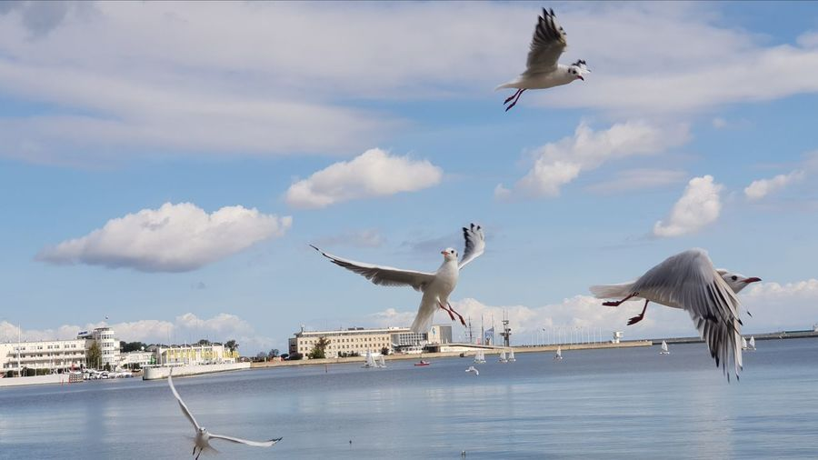 Bird Flying Spread Wings Water Seagull Sea Sky My Best Travel Photo Streetwise Photography