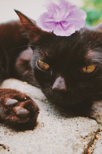 Pet Portraits Outdoors Flower Close-up Nature Photography Themes EyeEmNewHere The Week On EyeEm Animals In The Wild Fine Art Photography Pets Animal Themes Domestic Animals Full Length Animal Wildlife