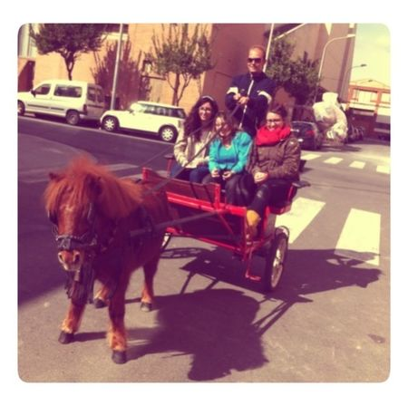 Corre, corre caballito... Taking Photos Fun Little Horse