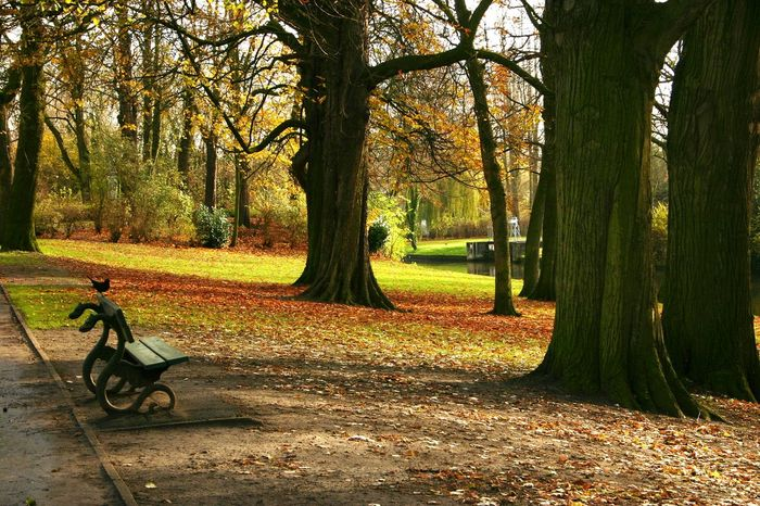 Beautiful Autumn Nature Green Color Bench Seat Bird Belgium Bruegge Quiet