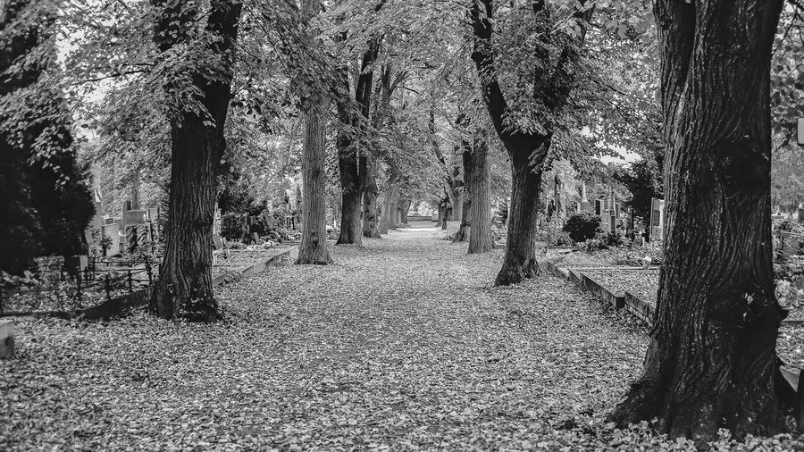 Autumn Beauty In Nature Black And White Cemetory City Nature No People Tree