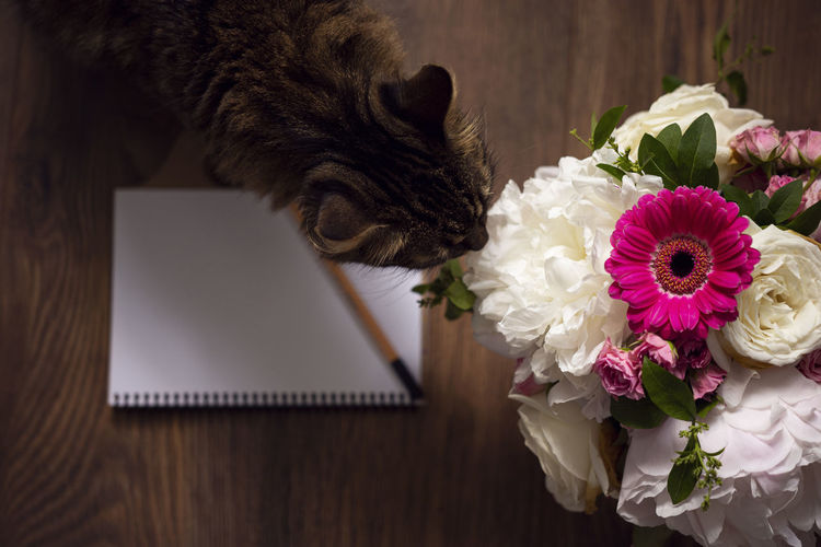 Close-up of a cat on flower bouquet