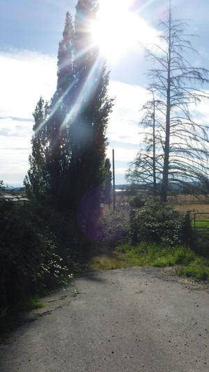 Taking Photos Check This Out Unedited The Purist Light And Color  Sunshine Sun Through Trees Country Road Marysville,WA
