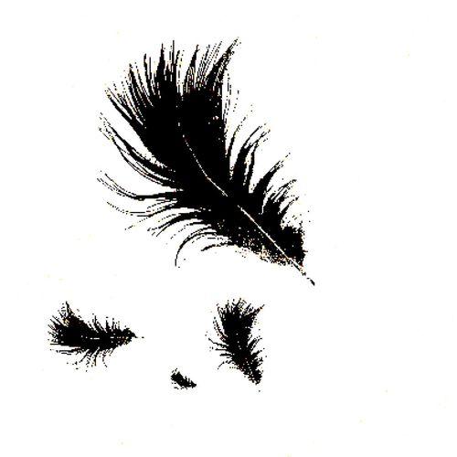 Feathers. Random Abstract Blackandwhite