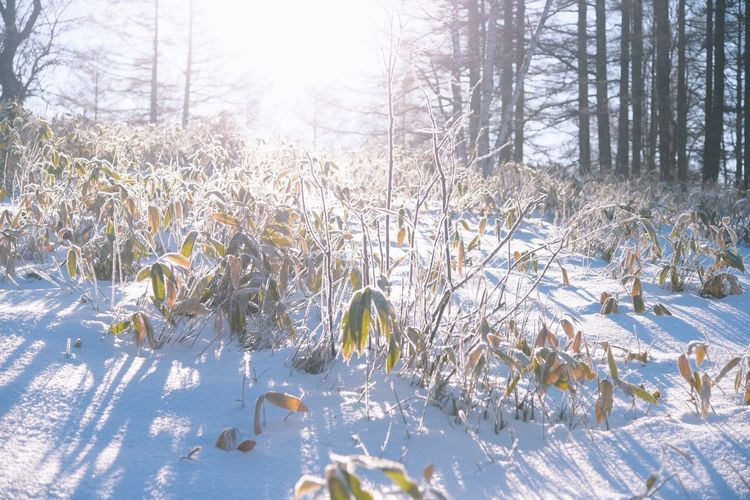 Plants growing on snow covered field