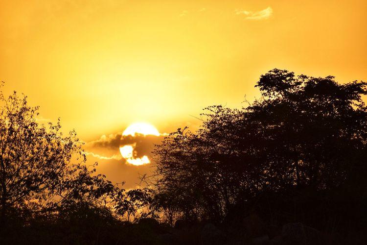 Sunset Sunrise Sun Sunlight Tree Sunset Silhouette Sky Close-up Scenics Calm Tranquil Scene Rocky Mountains The Great Outdoors - 2019 EyeEm Awards The Traveler - 2019 EyeEm Awards My Best Photo