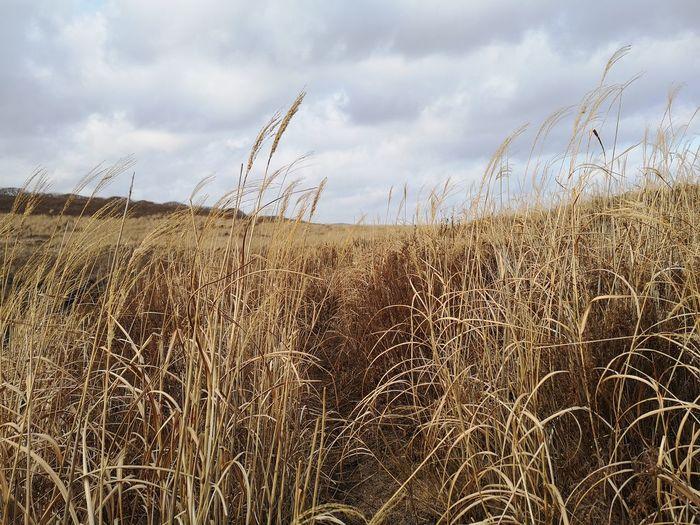 Towards Nature/Навстречу природе🌾🌾🌾 Cereal Plant Sky Cloud - Sky Grass