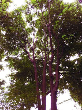 Fall Beauty Colourfulleaves Beautifultrees WonderfulBreeze DesrochesPhotography AmazingCapture EyeEmPhotoEdit CambridgeOntario Realrecognizereal  BeYourself<3