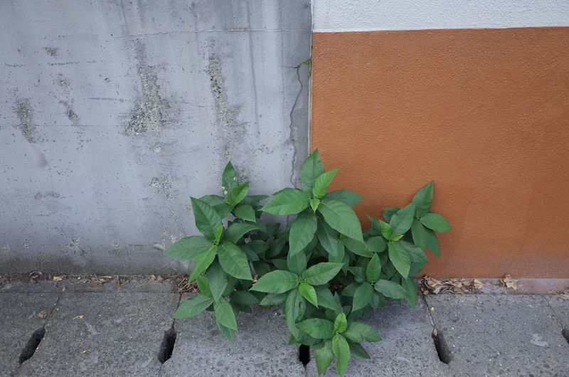 Plant growing on against wall