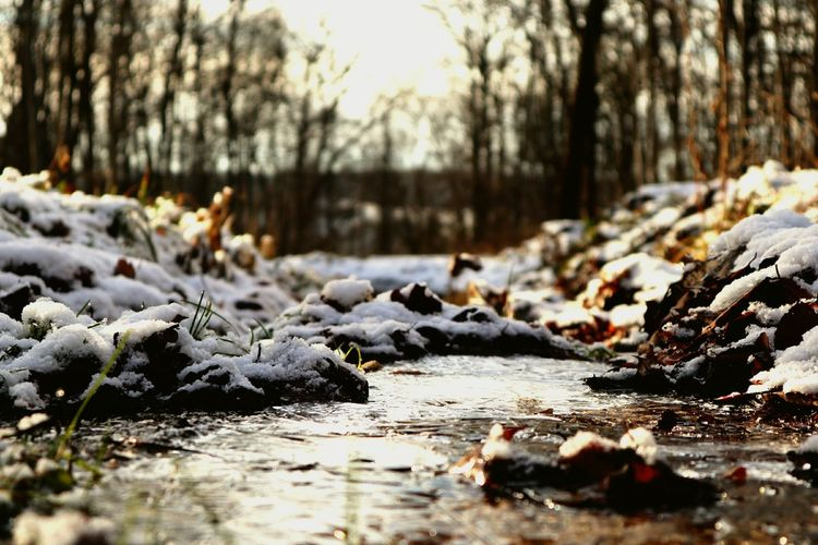 Ice River Nature_collection Nature Photography Low Angle View Trees Forest Forest Photography Focus On Foreground Water Sunset Golden Hour EyeEm Selects Nature Cold Temperature Snow Winter Water Tree Outdoors No People Animal Themes