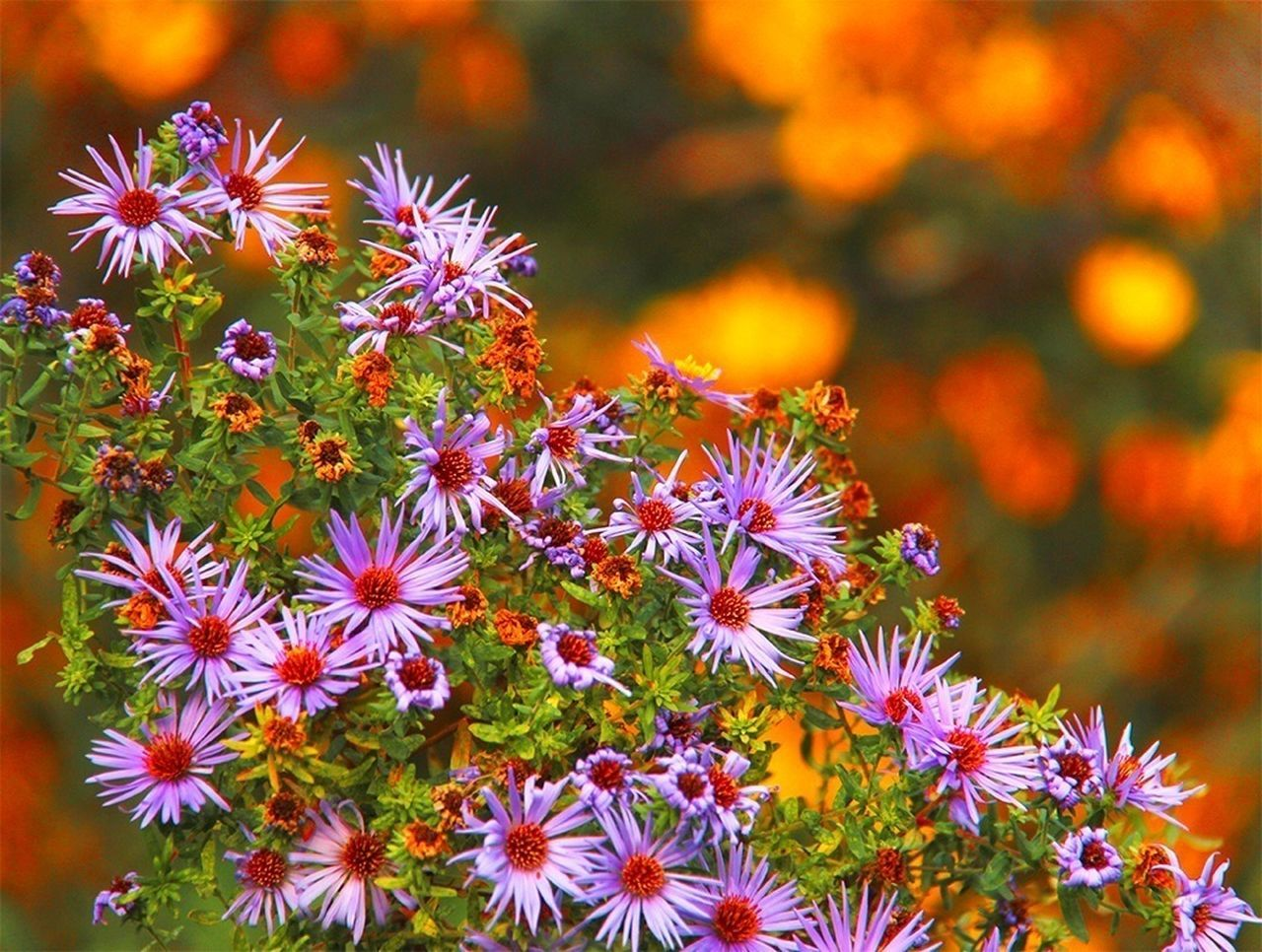 flower, petal, growth, flower head, nature, beauty in nature, fragility, freshness, plant, blooming, no people, outdoors, day, close-up
