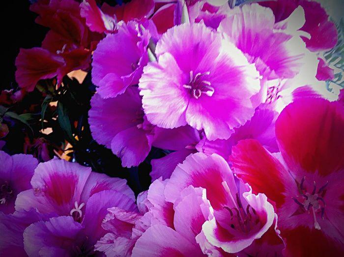 Violet By Motorola Waking yo with the spring! Springishere