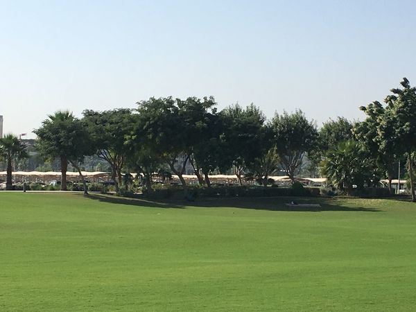 Outdoors Grass Palm Tree Tree Clear Sky Nature No People Beauty In Nature Day Tranquility Landscape Scenics Green Color Qatar Doha,Qatar Mia Park