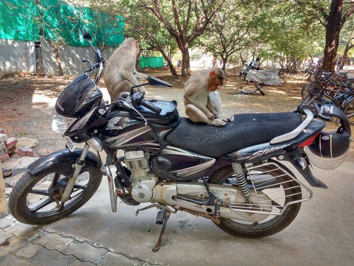 Funny monkeys on bike Bike Riding By Monkey FUNNY ANIMALS Funny Moments Funny Monkey Funny Monkey On Bi Funny Pictures Monkey Motorcycle
