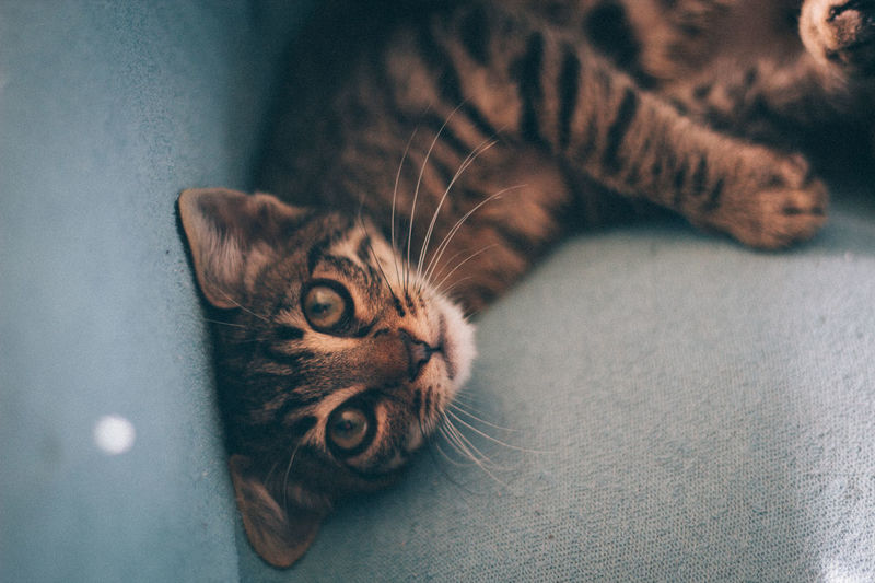 50mm Alertness Bright Canon Canon600D Canonphotography Cat Comfortable Curiosity Depth Of Field Dof Domestic Cat Looking At Camera National Cat Day One Animal Pets Portrait Relaxation VSCO